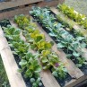 wood-pallet-raised-bed-garden-project
