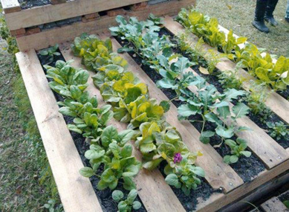 Wood Pallet Raised Bed Garden Project