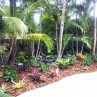 Backyard Makeover tropical landscape