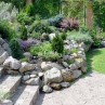 Beautiful  rock garden plants Photo Collection