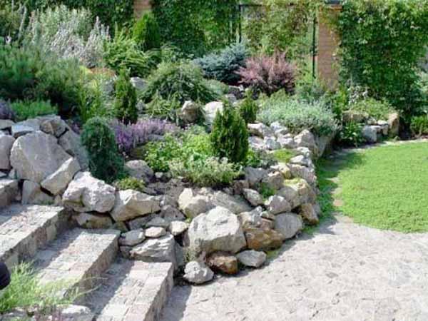 Beautiful  Rock Garden Plants Photo Collection