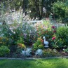 Color in the Perennial Garden