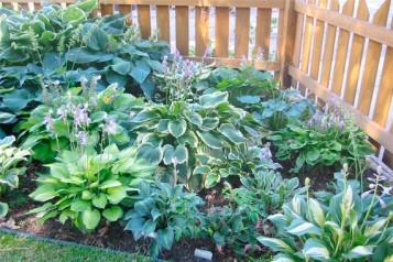 Designing The Perennial Garden In Small Space Picture Collection