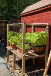 Fabulous  Cheap Landscaping Ideas