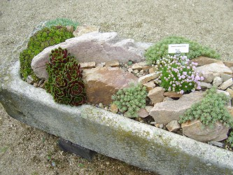 Fabulous Plants For Rock Gardens  Photo Gallery