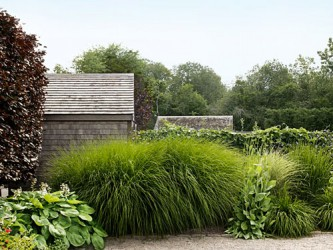 Fine Looking Grasses Garden