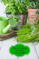 Gorgeous  Indoor Herbs Garden Product Picture