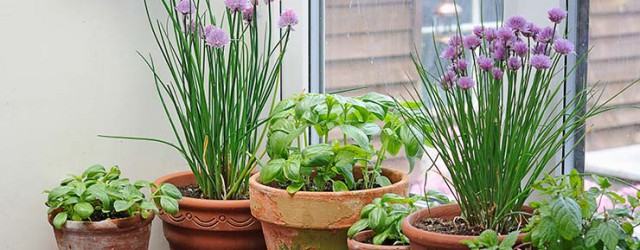 Gorgeous window herb garden Product Ideas