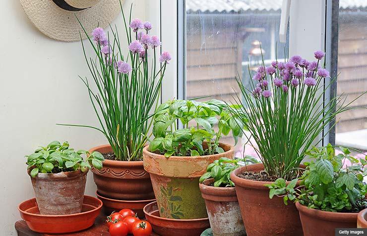 Gorgeous Window Herb Garden Product Ideas