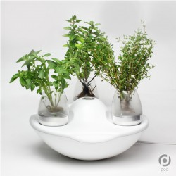 Stunning Potted Herb Garden Product Ideas