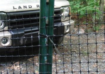 Wonderful Dog Electric Fence Image Collection