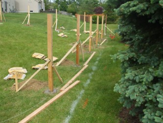 Cheap Dog Fencing  Image Gallery